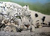 Diane Marcotte_Snow Leopard.jpg
