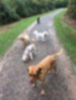5 dogs nightingale.jpg