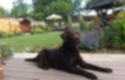 dog charlie in garden