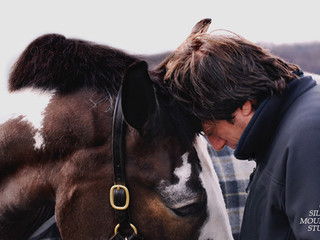 South Salem Therapist Fosters the Horse-Human Connection