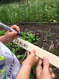 Garden Guru June 2020
