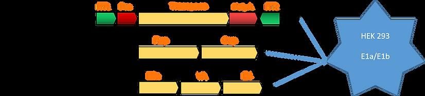 Triple plasmid system.png