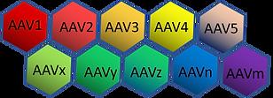 AAV Kit.png