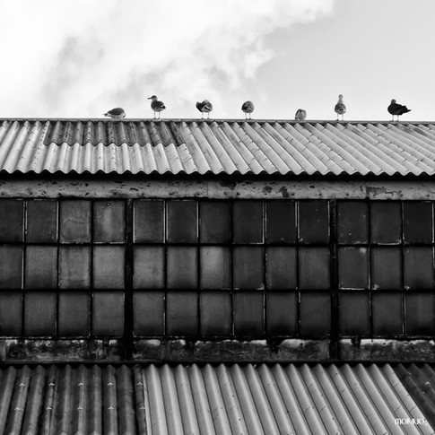 Sentinelles - Tirage n°1 / 30