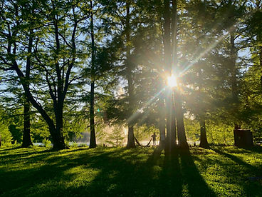 Sunlight peeking through the trees in the park for walk and talk therapy in St. Louis, MO with STL therapist Stephanie. Meet at Forest Park for walking therapy or park sessions near Kirkwood, MO. Overwhelmed moms, postpartum counseling and moms of teens can get help with online therapy in Missouri too!
