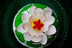 GIA_20140412_0056.jpg