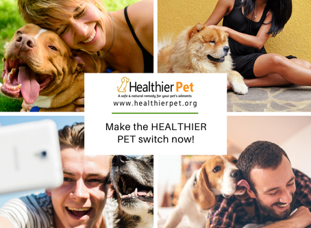 See why thousands of pet owners are making the switch to Healthier Pet CBD oil.