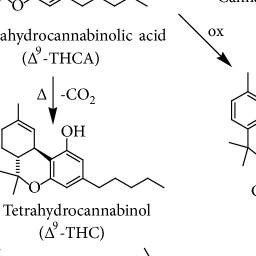 Cannabis sativa L. and Nonpsychoactive Cannabinoids: Their Chemistry and Role against Oxidative Stre