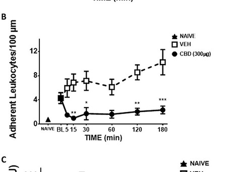 Attenuation of early phase inflammation by cannabidiol prevents pain and nerve damage in rat osteoar