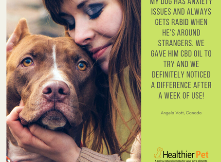 Dog owners all over the country are continually amazed after using Healthier Pet CBD oil. Try it now