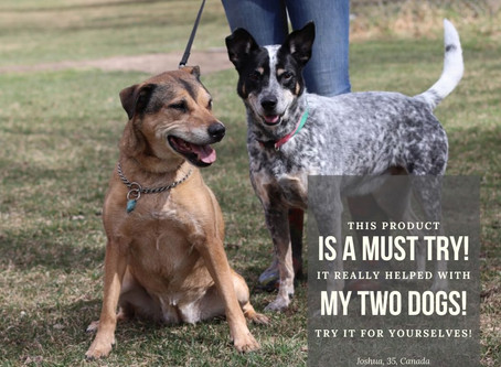 Whether you have one dog, two, or more, you can't go wrong with Healthier Pet CBD oil!