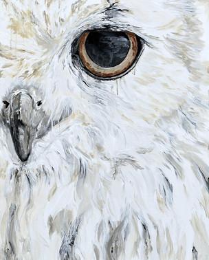 Owl - Pacific Northwest Series