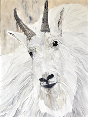 """""""Hamilton"""" - Mountain Goat"""