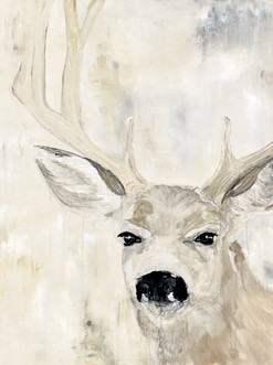 Deer - Pacific Northwest Series