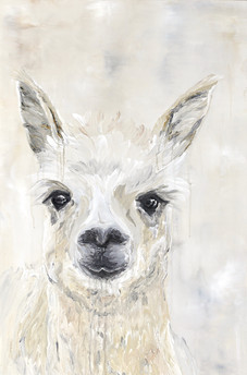 """Louise"" the Alpaca."