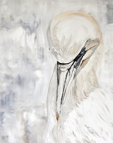 Gannet.