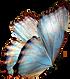 kisspng-butterfly-greta-oto-clip-art-but