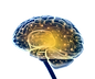 kisspng-brain-research-neuroscience-nerv