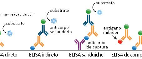 Conheça os diferentes tipos de ELISA