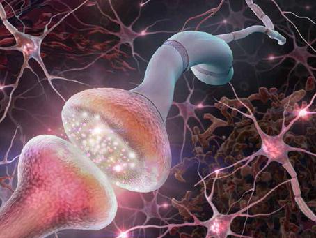 Neurociência com Biolegend e sua grande variedade de anticorpos