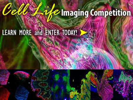 Concurso de imagens de microscopia da Biolegend