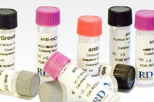 Anticorpos | R&D