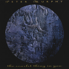 The Scarlet Thing In You - Peter Murphy