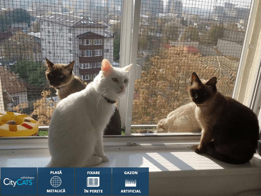 4-pisici