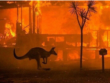 We Are The Bushfires