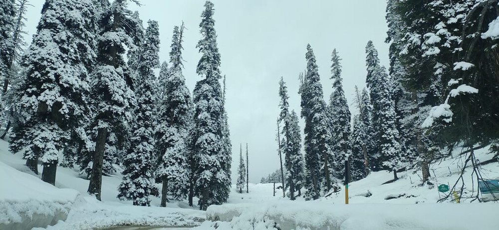 Gulmarg in winter 2020 | How to plan a trip to Gulmarg in winte