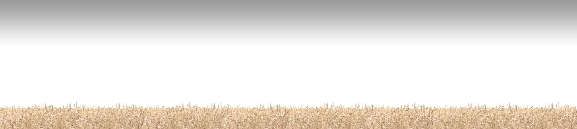 ооо до-рус, до-рус, ооо дорус, мука оптом, мука цена, мука купить, мука пшеничная, мука высший сорт, мука 1 сорт