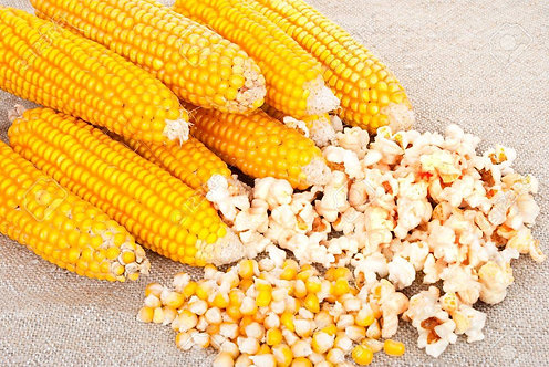 Maïs pop corn (epi)
