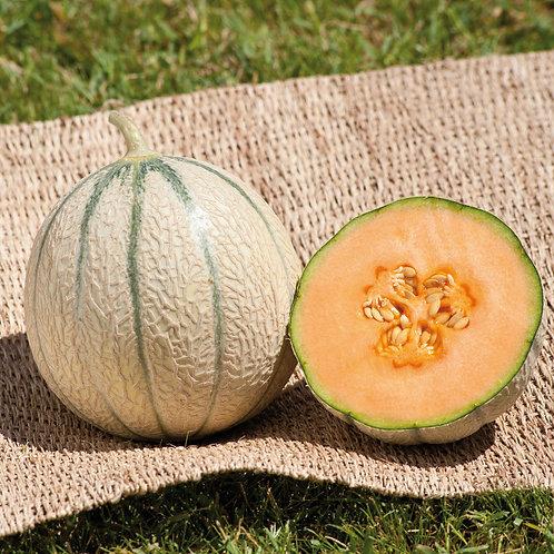 Melon bio calibre 12