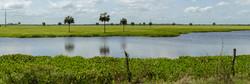 Los Esteros de Camaguán