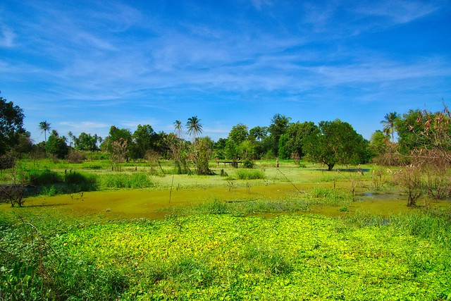 grasslands of Koh Kret
