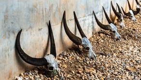 Wat Hua Krabeu - The Bizarre Temple of the Buffalo Skulls