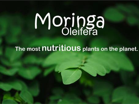 Beat Malnutrition with Moringa