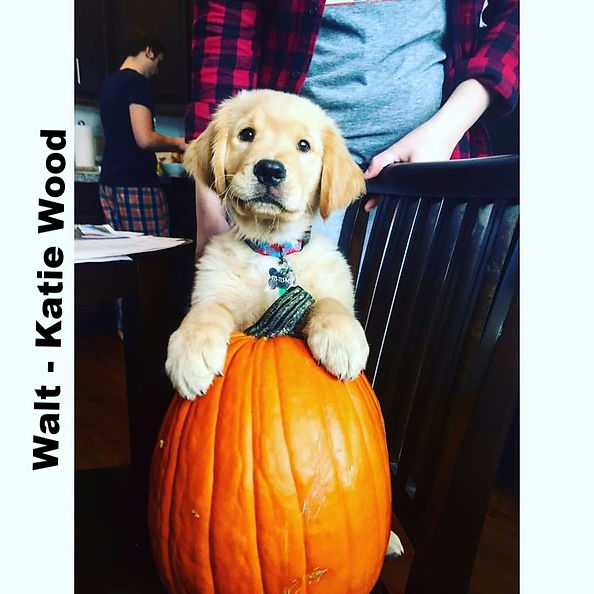 Walt helping to get ready for Fall!