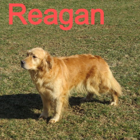 Reagan%2520mvk_edited_edited.jpg