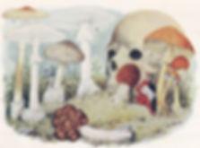 ядовитый гриб.jpg