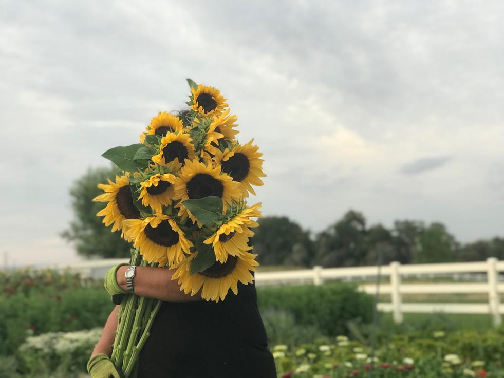 Sunnies from the farm