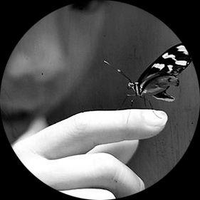 Vlinder kijken aandacht mindfull