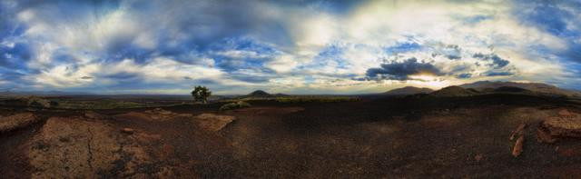 survivor_TREE_Panorama1.jpg
