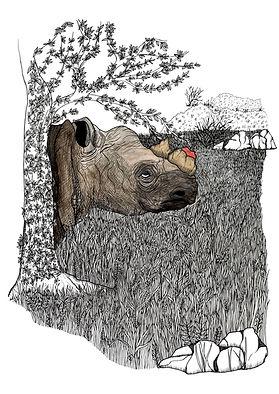 Black rhino Critically Endangered - seri