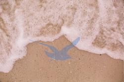 The Oceanic Gull