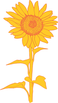 Onkaparinga Rise Sunflower illustration
