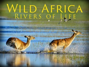 wild-africa-rivers-of-life.jpg
