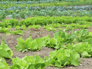 How to Simplify your Organic Certification