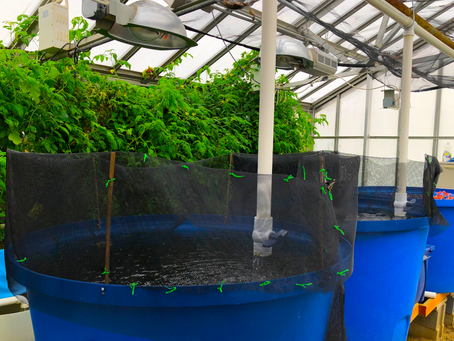 Could Aquaponics Work on Your Farm?