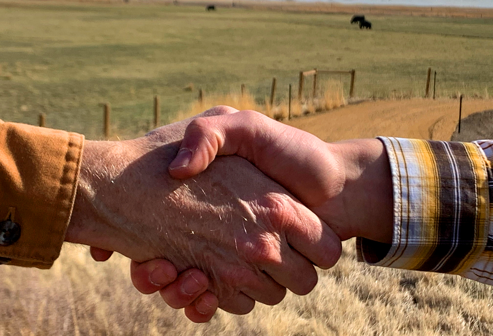Two farmers shake hands in a cow pasture